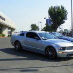 Shepard Mustang